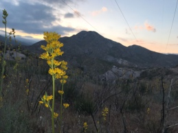 flowers at sunset, coming up from cajon pass