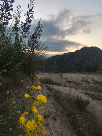flowers at sunset coming out of Cajon pass